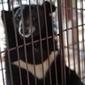 WE ANIMALS   Photographs   Redemption for Animals   Scoop.it