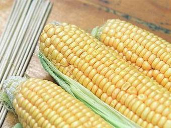 India: Corn exports likely to fall 31% in 2013-14 | Maize | Scoop.it