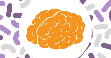 How Gut Bacteria Protect The Brain | Gut Health | Scoop.it