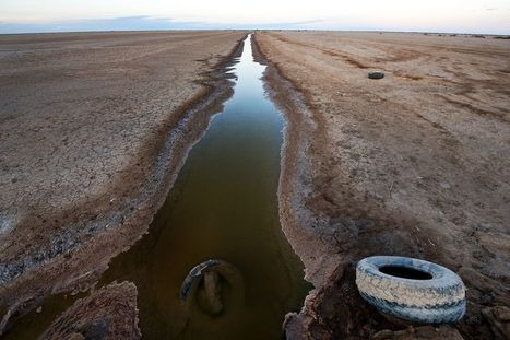 "Historic ""Pulse Flow"" Brings Water to Parched Colorado River Delta 