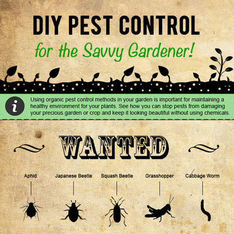A Gardening Infographic: DIY Pest Control | Sustain Our Earth | Scoop.it