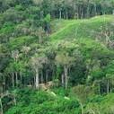 Plateau des Guyanes, le second poumon de la planète est menacé   La Guyane   Scoop.it