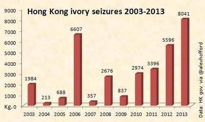 HongKong latest ivory seizure stats | Wildlife Trafficking: Who Does it? Allows it? | Scoop.it