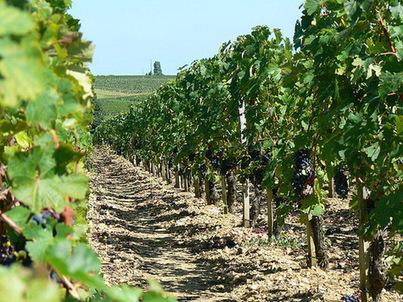 Bras de fer entre la France, ses viticulteurs et le régulateur du Net | La-Croix.com | Le vin quotidien | Scoop.it