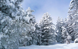 Snow Forest Wallpaper | coolwallpapers | Scoop.it