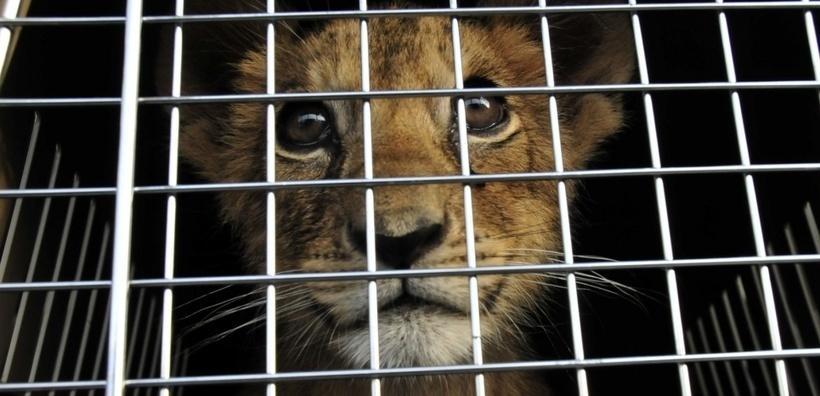 Le Liban adopte de nouvelles mesures pour la protection des animaux sauvages