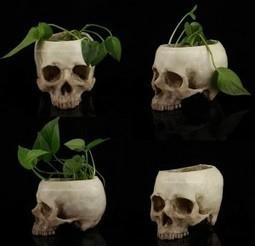 高崎ドクロ 頭蓋骨模型通販 | 高崎ドクロ 頭蓋骨模型通販 | Scoop.it