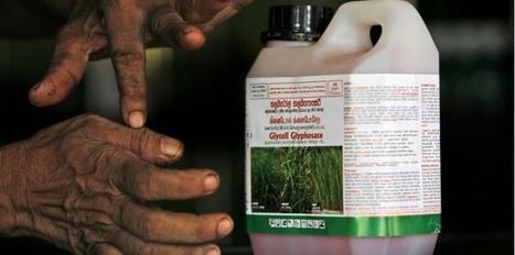Le Roundup, le pesticide cancérogène le plus répandu dans le monde | Toxique, soyons vigilant ! | Scoop.it