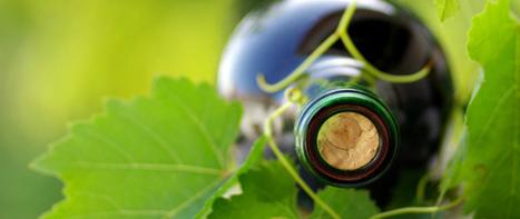 Criada etiqueta de certificação de sustentabilidade para empresas vinícolas | Notícias escolhidas | Scoop.it