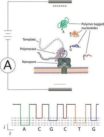 Researchers collaborate on inexpensive DNA sequencing method   Amazing Science   Scoop.it