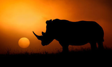 South African minister backs legalisation of rhino horn trade - The Guardian | Kruger & African Wildlife | Scoop.it