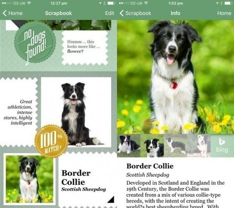 Une application pour reconnaître la race d'un chien sur base d'une simple photo | geeko | web2Partner | Scoop.it