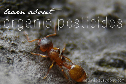The Dangers of Pesticides - Sustainable Baby Steps | You are what you eat! | Scoop.it