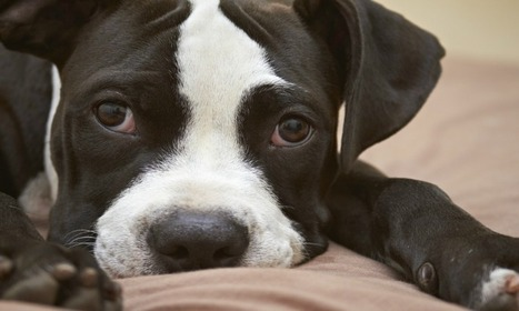 Dogs hear human happiness –it's in his (or her) master's voice | Skylarkers | Scoop.it