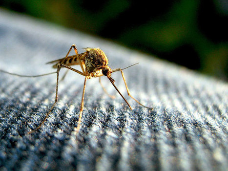 Gates Foundation Redoubles Its Commitment to Stop Mosquito-Borne Disease | Philanthropy - Legacy From The Heart | Scoop.it