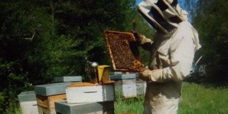 Au plus près des abeilles | Aunis Marais Poitevin et la Presse | Scoop.it