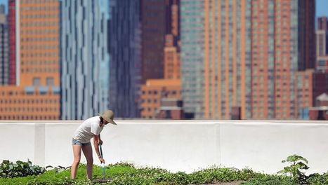Sur les toits des villes, série documentaire sur Arte | ECOLOGIE BIODIVERSITE PAYSAGE | Scoop.it