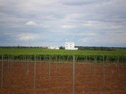 Visiting Herdade do Esporão'Winery | Wired Wines of Alentejo | Scoop.it