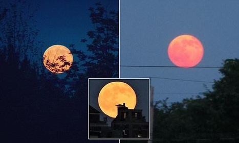 Strawberry moon lights up solstice sky for the first time since 1967   Miscellaneous Topics   Scoop.it