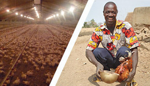 Stop aux exportations des surplus alimentaires européens vers l'Afrique | Questions de développement ... | Scoop.it