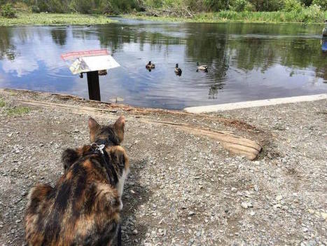 Honey Bee, a Blind Cat From Fiji, Enjoys Hiking Near Seattle - Catster | Caring for Cats | Scoop.it
