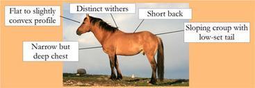 Pryor Mustangs : Colors & Conformation of Pryor Mountain Wild Horses | DanyelleD 3 | Scoop.it