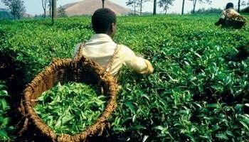 La RD Congo affiche ses ambitions agricoles | Questions de développement ... | Scoop.it