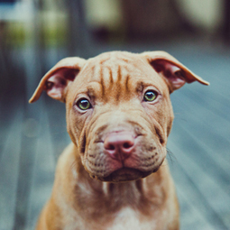 Dog owners object to 'background checks' for dogs | Radio Show Contents | Scoop.it