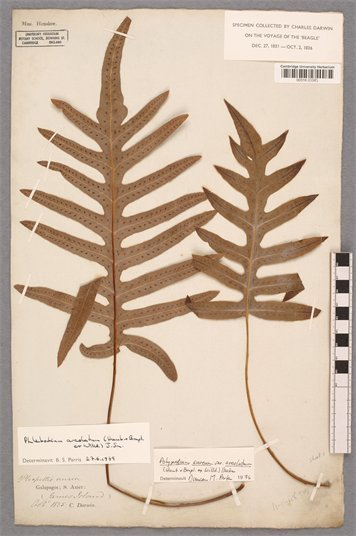New secrets of the plant kingdom uncovered after over a century in storage. University of Cambridge | Herbaria | Scoop.it