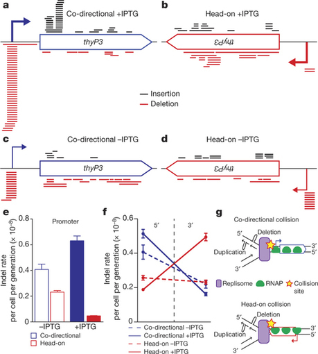 The nature of mutations induced by replication–transcription collisions | Plant-Microbe Symbiosis | Scoop.it