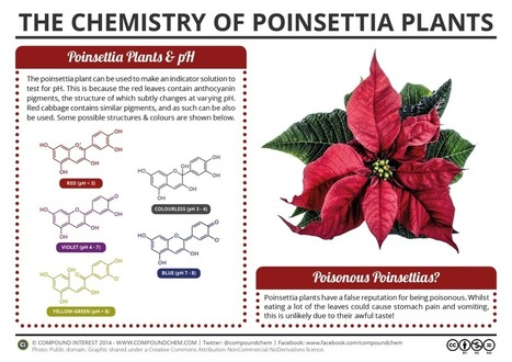 The Chemistry of Poinsettia Plants | SCIENCE | Scoop.it
