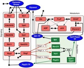 Modeling Integrated Cellular Machinery Using Hybrid Petri-Boolean Networks | Social Foraging | Scoop.it