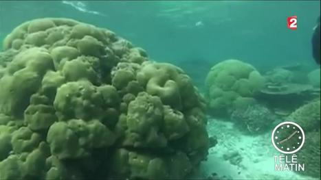 La Grande Barrière de corail en voie de disparition | Biodiversité | Scoop.it