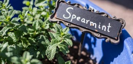Garden Kitchen Teaches Seed-to-Table Cooking   UANews   CALS in the News   Scoop.it