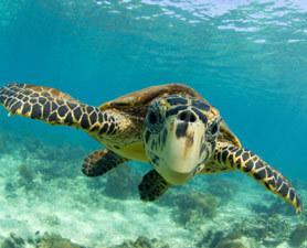 Sharkonomics: Why Shark Sanctuaries Make Sense | Food for Pets | Scoop.it