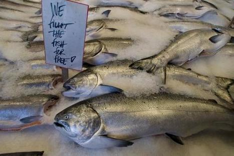 Humans have been fishing for salmon for at least 11,500 years - UPI.com | All about water, the oceans, environmental issues | Scoop.it