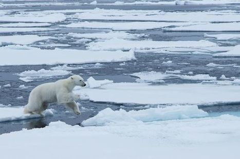 Arctic Circle Observatory Sees Thaw | Churchill Polar Bears | Oceans and Wildlife | Scoop.it