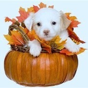 Your Favorite Thanksgiving Pics/Videos | Pedegru | Animals Make Life Better | Scoop.it