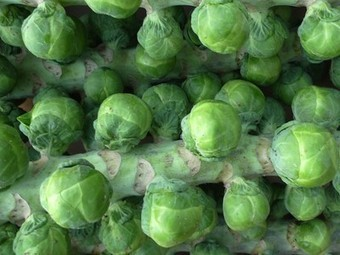 They might be small, but Brussels sprouts are incredible powerhouses of nutrition - Treehugger | Nutrition Dos and Don'ts | Scoop.it