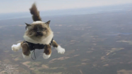 Insurance company's skydiving cats cause alarm | MN News Hound | Scoop.it
