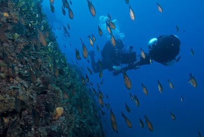 Les fonds marins au large de Monaco bientôt visibles sur Google Map - La Croix | Séjours nature dans le Sud de la France: Garrigue et Calanques | Scoop.it
