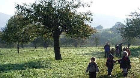Llegan a España las escuelas-bosque de Alemania | Educación: Formal,  informal, no formal, medioambiental.. | Scoop.it