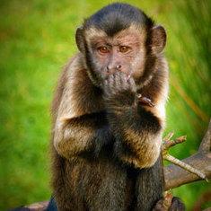 Monkeys Stay Away from Mean People: Scientific American | Potpourri | Scoop.it