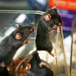 How a new mouse study in Science teaches us about fate | Personality | Scoop.it