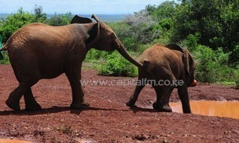 The war on poaching is on – KWS   Capital News   Kruger & African Wildlife   Scoop.it