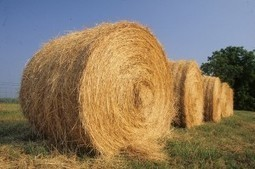 Hay Field Day to be held July 12 | NCSU CALS | Research from the NC Agricultural Research Service | Scoop.it