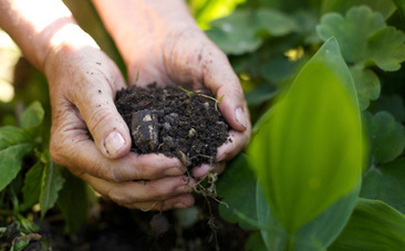 A Little Bit of Compost Could Help Fight Climate Change | Lets Be Social | Scoop.it