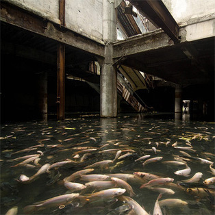 An Abandoned Bangkok Shopping Mall Hides a Fishy Secret | Aquaponics Cooking | Scoop.it