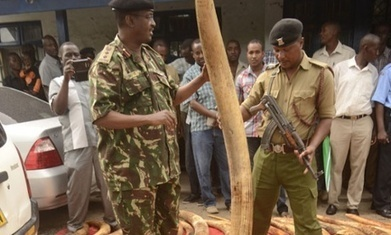 Kenya at the crossroads: it's time to root out the elites who control wildlife crime | The Fight for Elephant & Rhino Survival | Scoop.it
