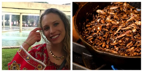 Why Is This Girl Eating Bugs and Climbing El Cap? | Entomophagy: Edible Insects and the Future of Food | Scoop.it